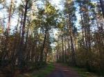 folder Sügisene mets